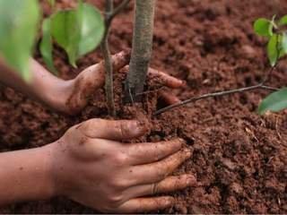 На Вологодчине высадят более 40 тысяч деревьев